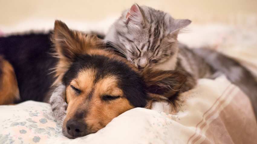 Cat Owners Contemplate Differences Between Cats and Dogs