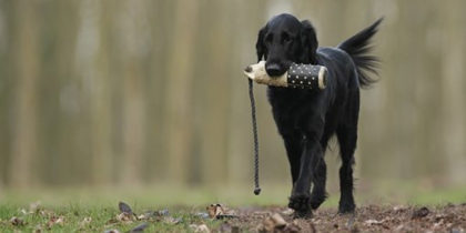 DETERMINING THE BEST ACCESSORIES FOR YOUR DOG