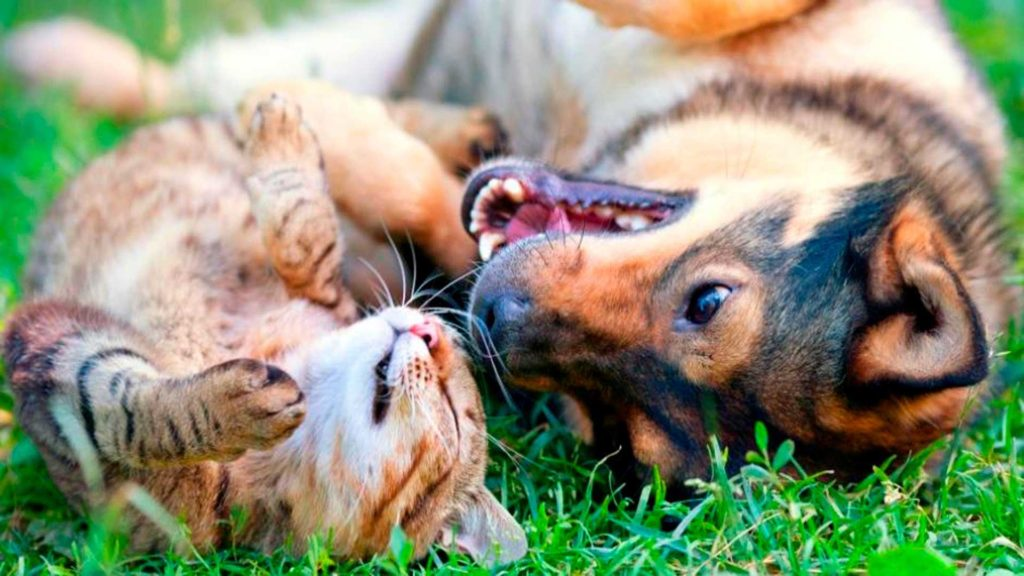 Home Care For Cats and Dogs - Keeping the Cost Down and also the Health Up