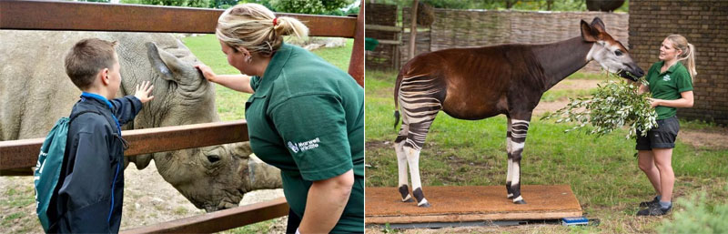 Tips on Becoming a Zookeeper