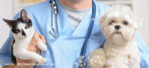 Veterinarians Add To The Life Of The Pet