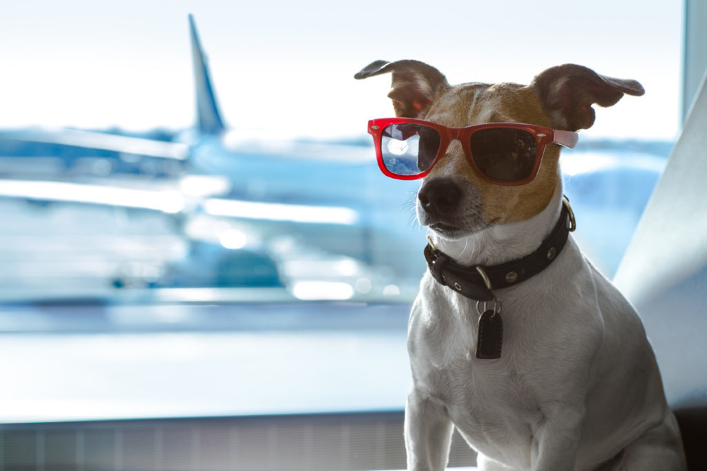 Airline Requirements When Traveling With Pets