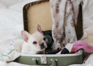 Important Tips For Safe and Pleasant Pet Travelling
