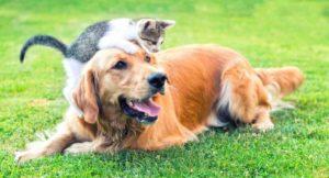The Elderly Dog - Care and Upkeep