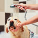 Dog Accessories - What is Important For Dog Grooming?