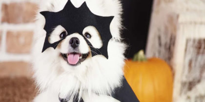 Pet Costumes - Ruin Your Pet This Halloween