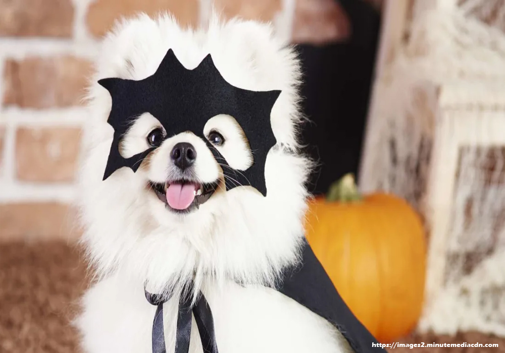 Pet Costumes – Ruin Your Pet This Halloween