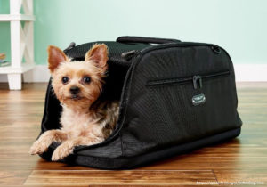 Small Dog Accessories Needed for Traveling