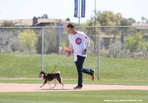 Spring Training For Your Dog