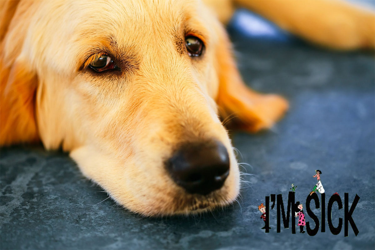 What to Do If Your Dog Falls Unwell?