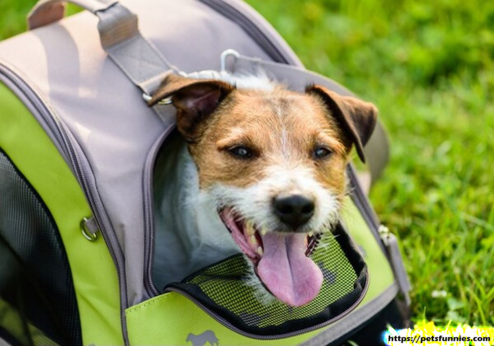 Choosing the Right Pet Carrier for Your Dog