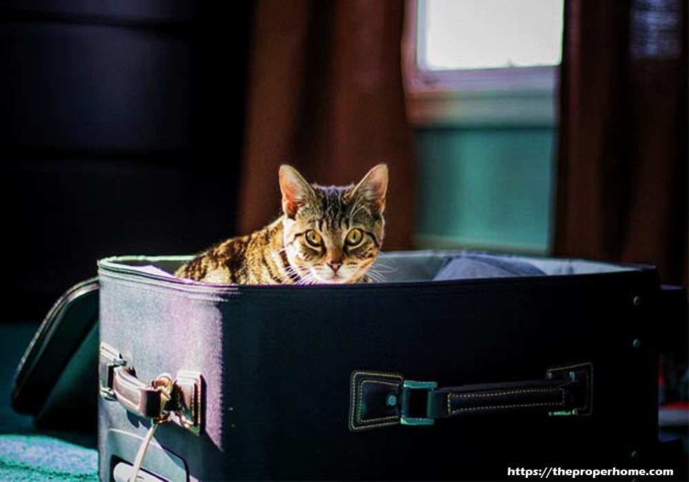 Choosing the Right Pet Carriers for Traveling