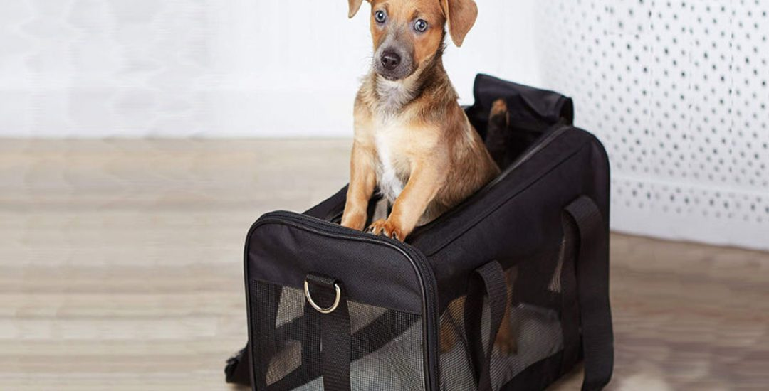 The Truths About Pet Carriers