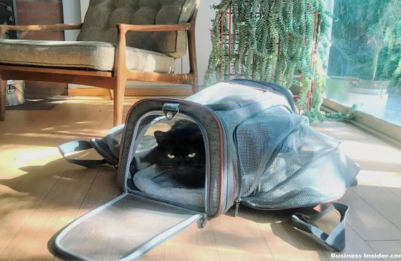 The Versatility of Pet Carrier Purse