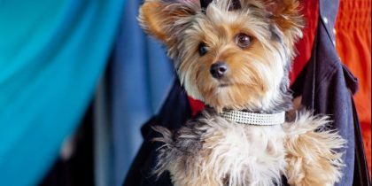Selecting the Right Pet Carrier - A Comfortable Option For Your Four-Legged Friend