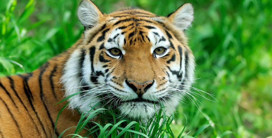Change The World – Adopt An Endangered Animal