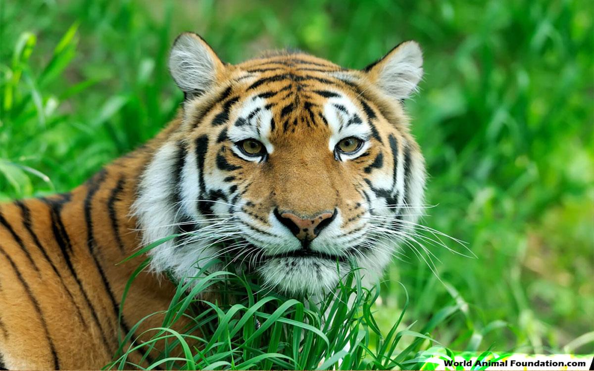 Change The World - Adopt An Endangered Animal