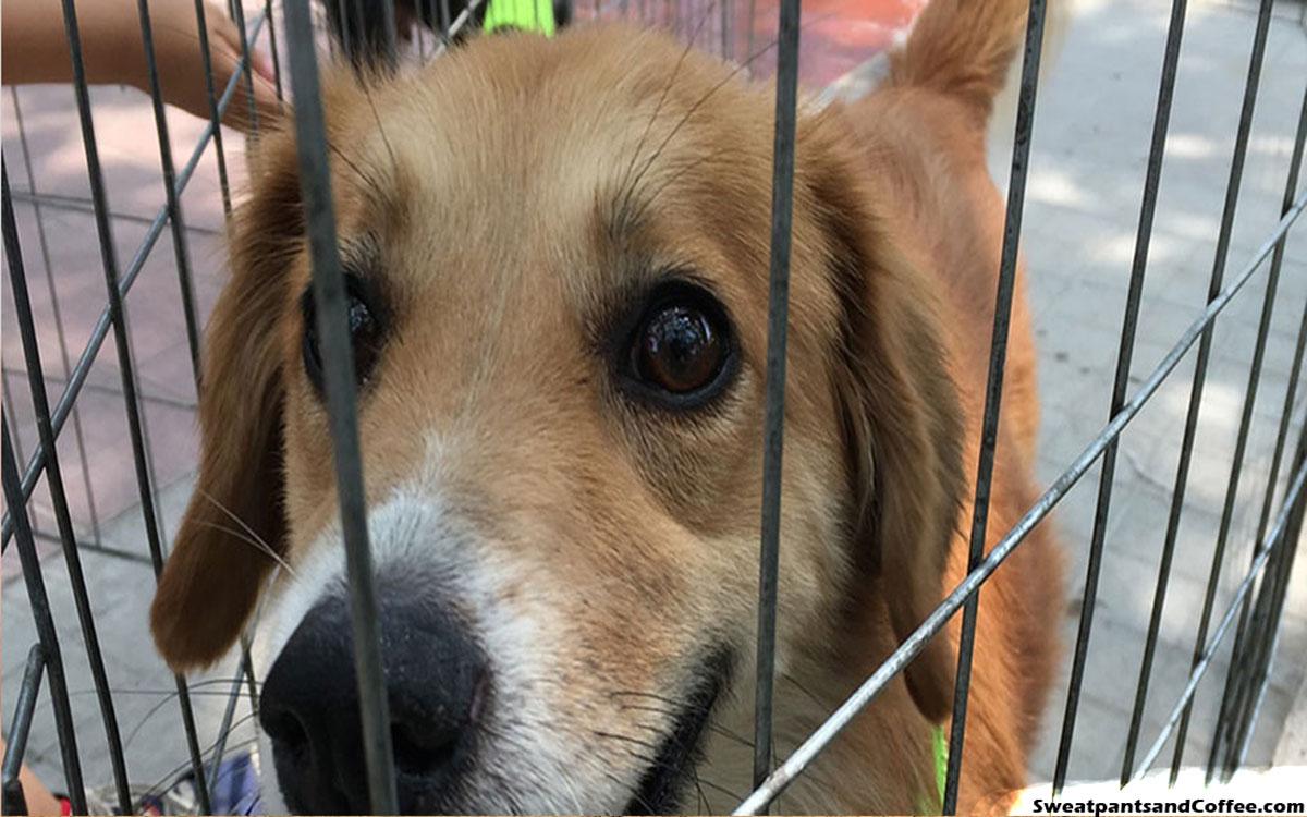 Bringing Awareness to Animal Adoption