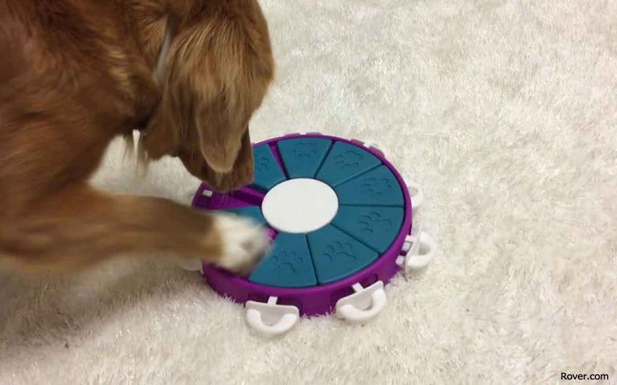 Activities to help keep Your Dog Busy