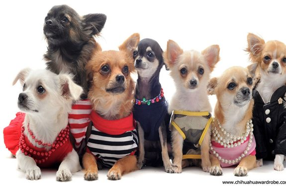 Buying Pet Apparel
