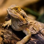Buying What You Need for Your Reptile Pets