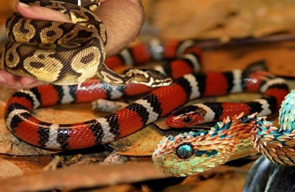 Exotic Pets - Snakes