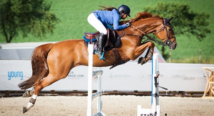 Types of Horse Jumping Courses