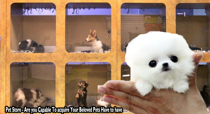 Pet Store - Are you Capable To acquire Your Beloved Pets Have to have