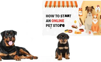 The Straightforward Technique to Get started a web-based Pet Store