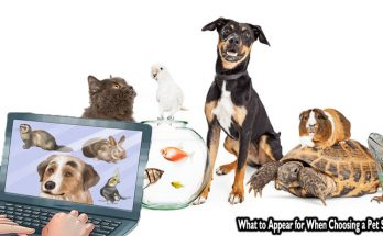 What to Appear for When Choosing a Pet Store