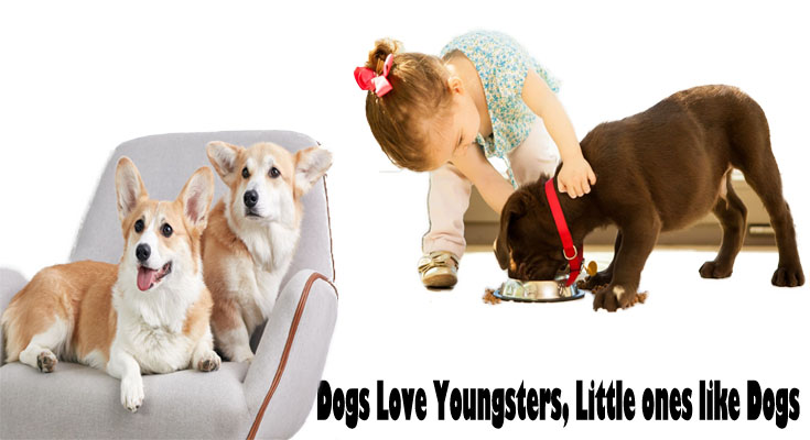 Dogs Love Youngsters, Little ones like Dogs