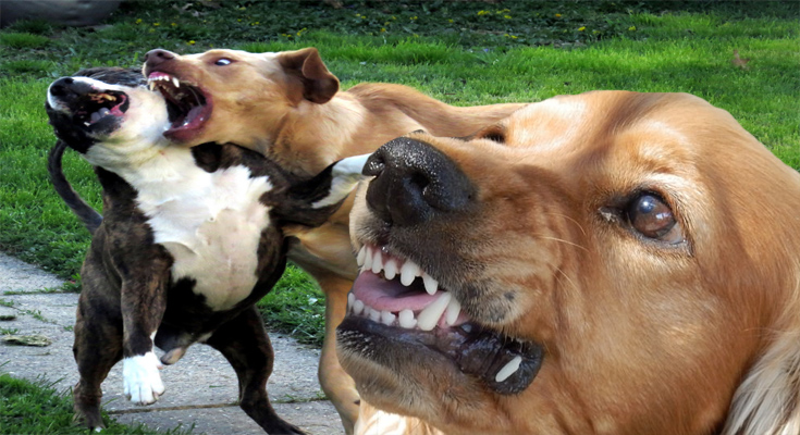 Intense Pet Actions - How to Quit Aggressive Actions in Canine