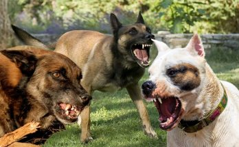 Tips on how to Fix Dog Aggression