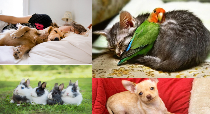 Best pets to have in an American House