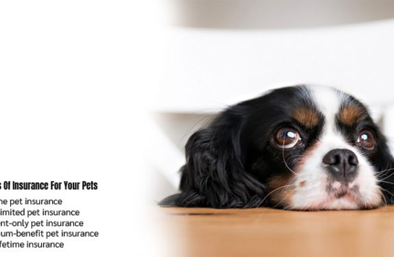 5 Types Of Insurance For Your Pets