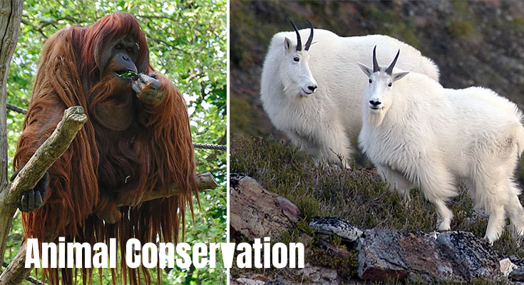 What Are The Major Challenges And Prospects Of Animal Conservation?